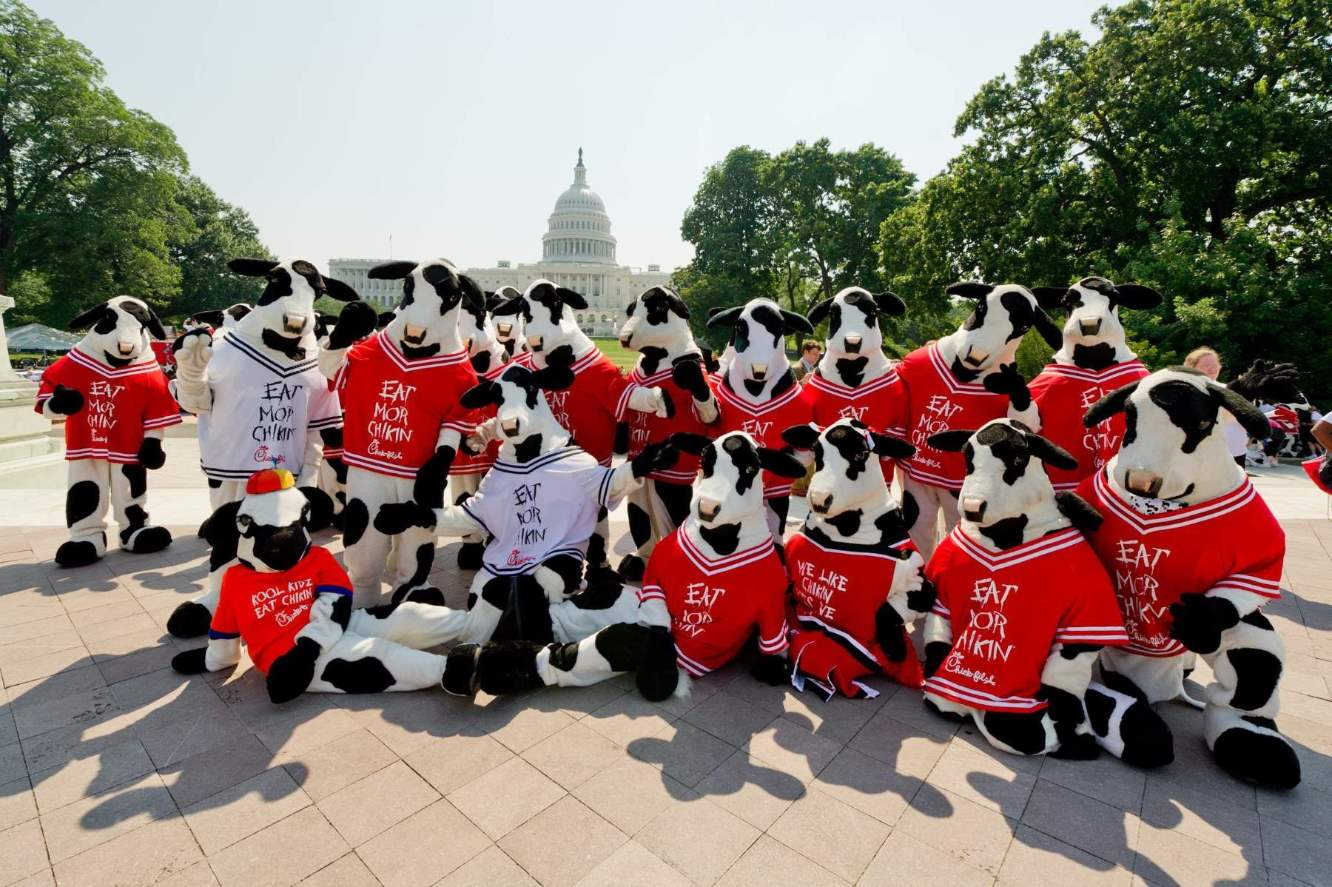 2011 – The Cows herd in Capitol Hill for Cow Appreciation Day